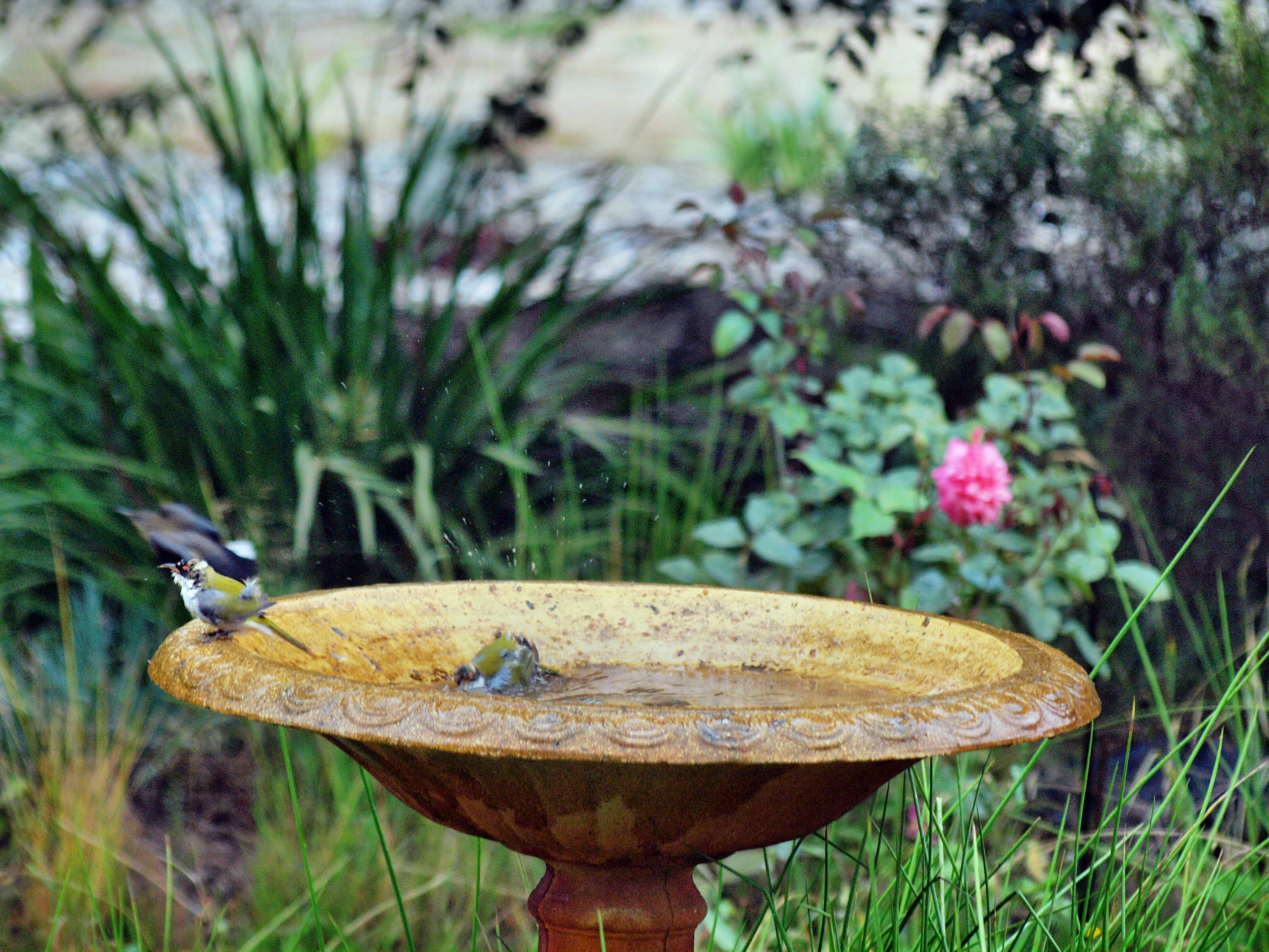 Bird-bath-40.jpeg