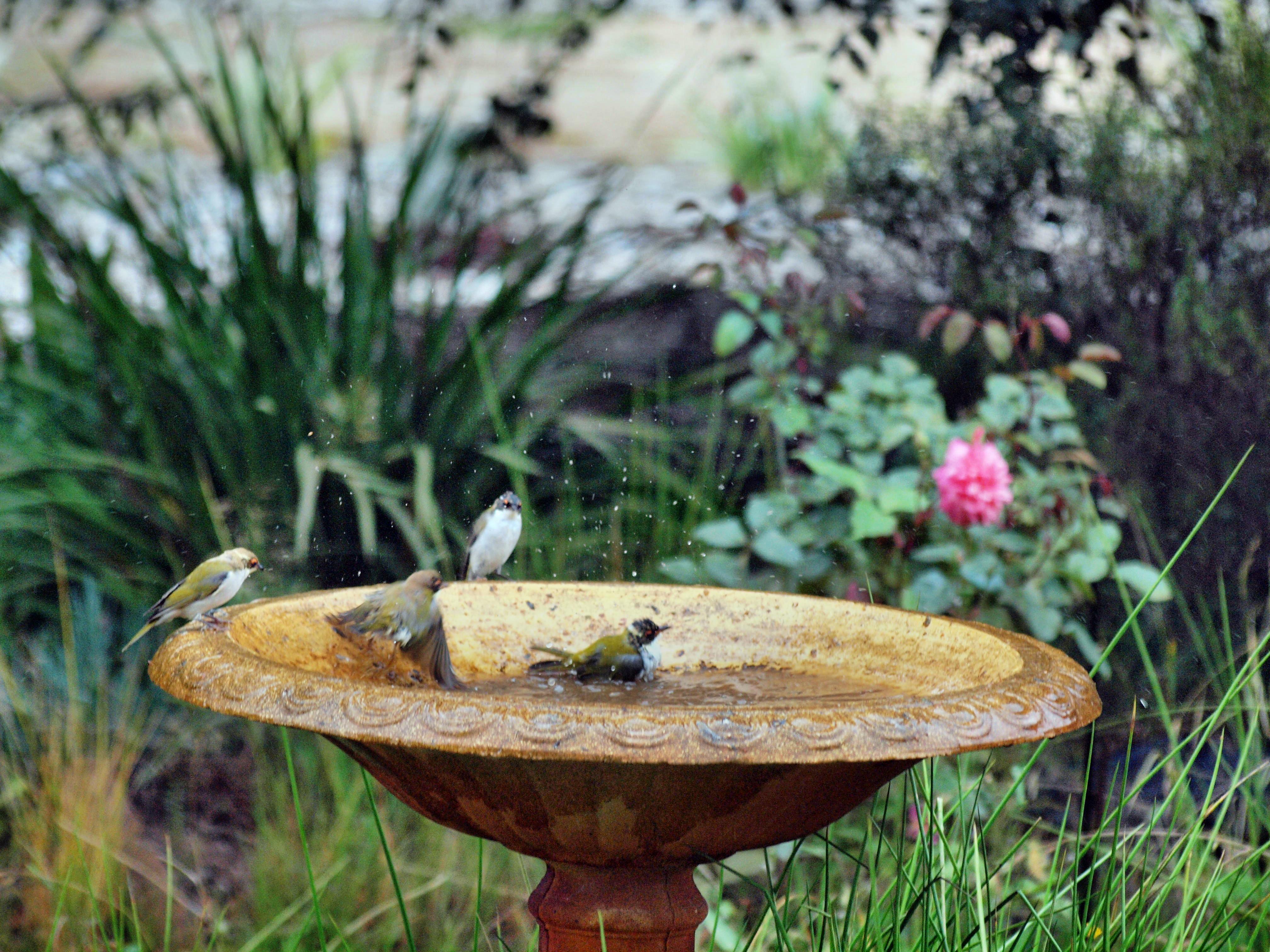 Bird-bath-41.jpeg