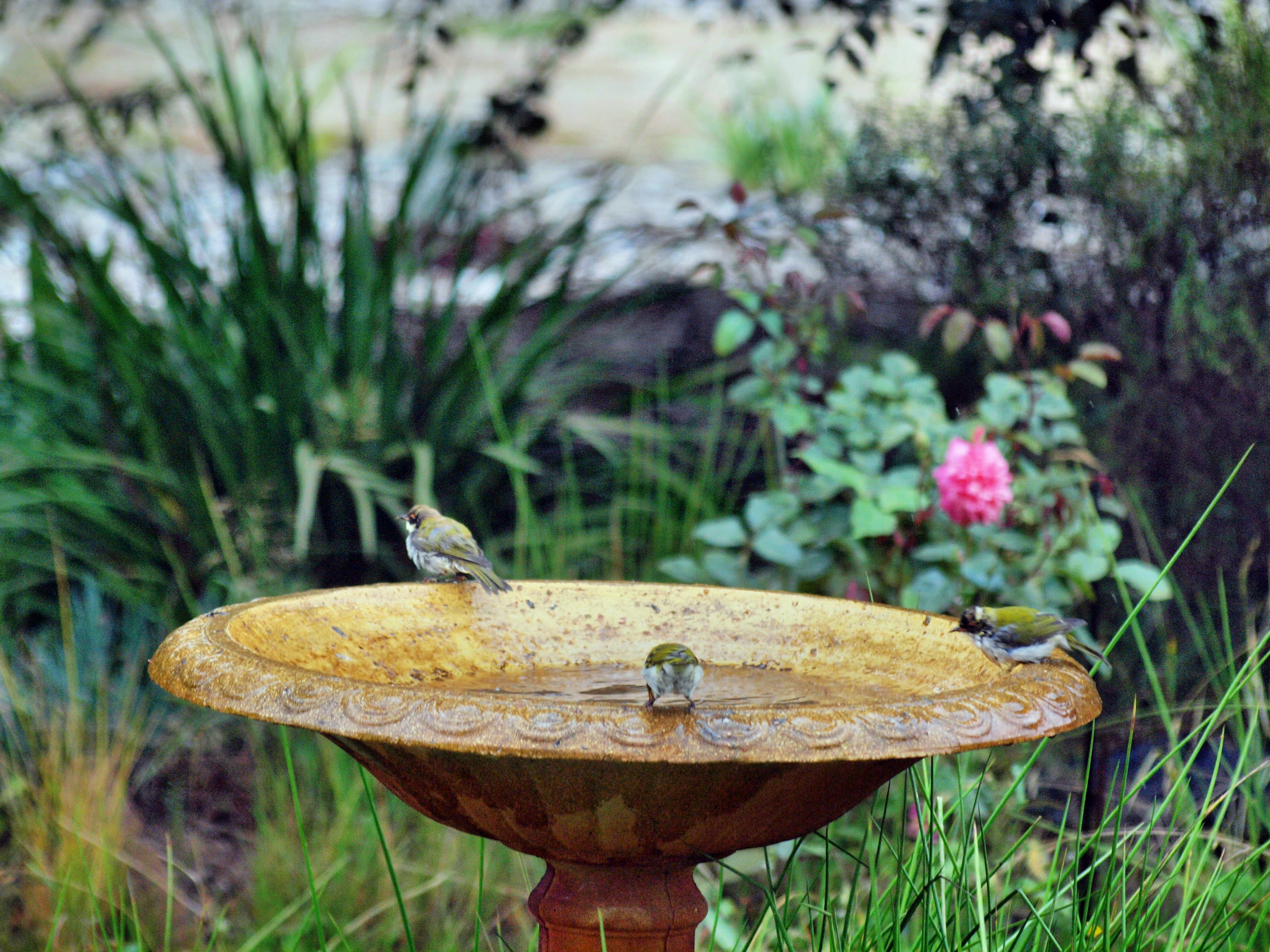 Bird-bath-42.jpeg
