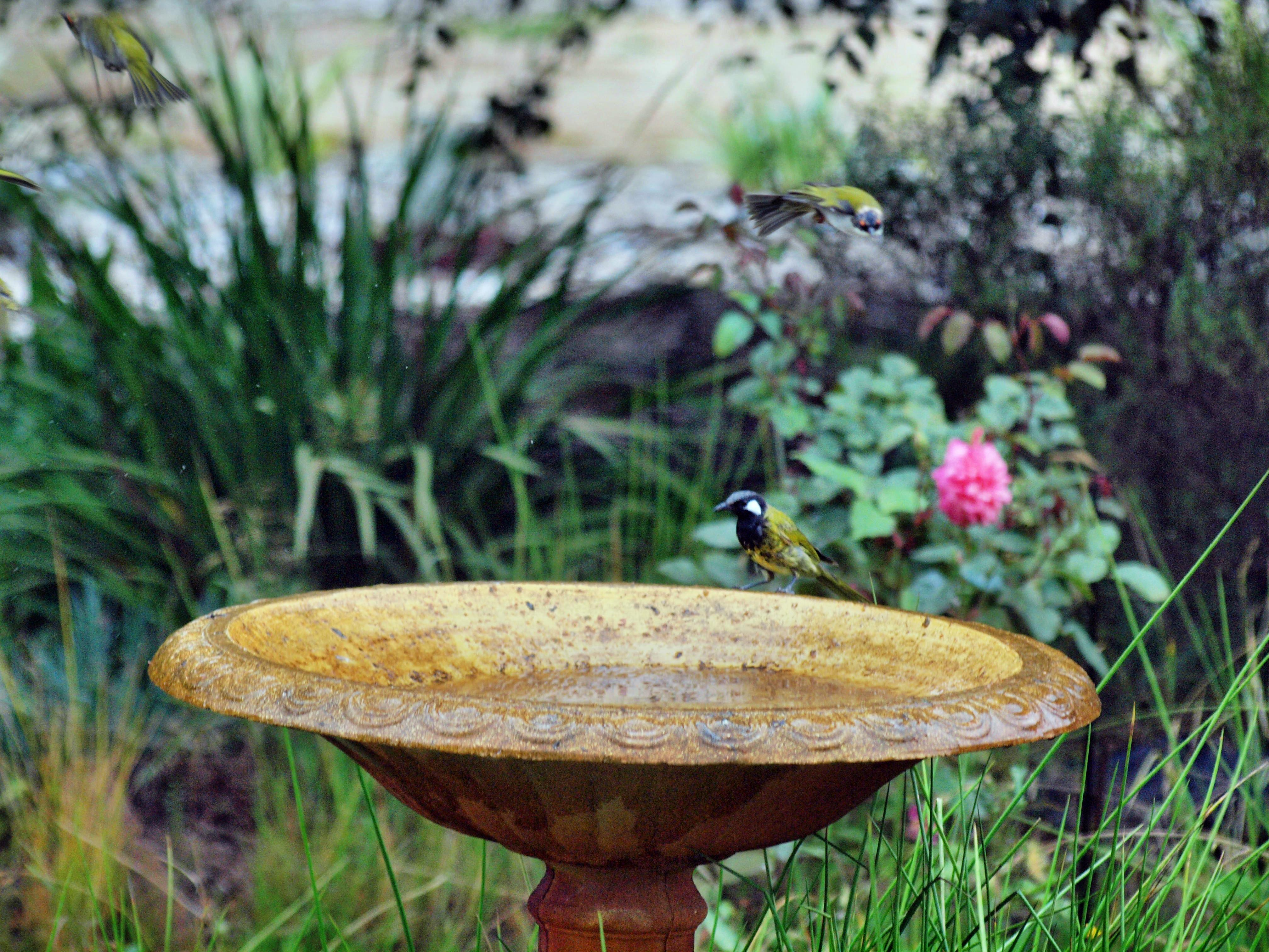 Bird-bath-43.jpeg