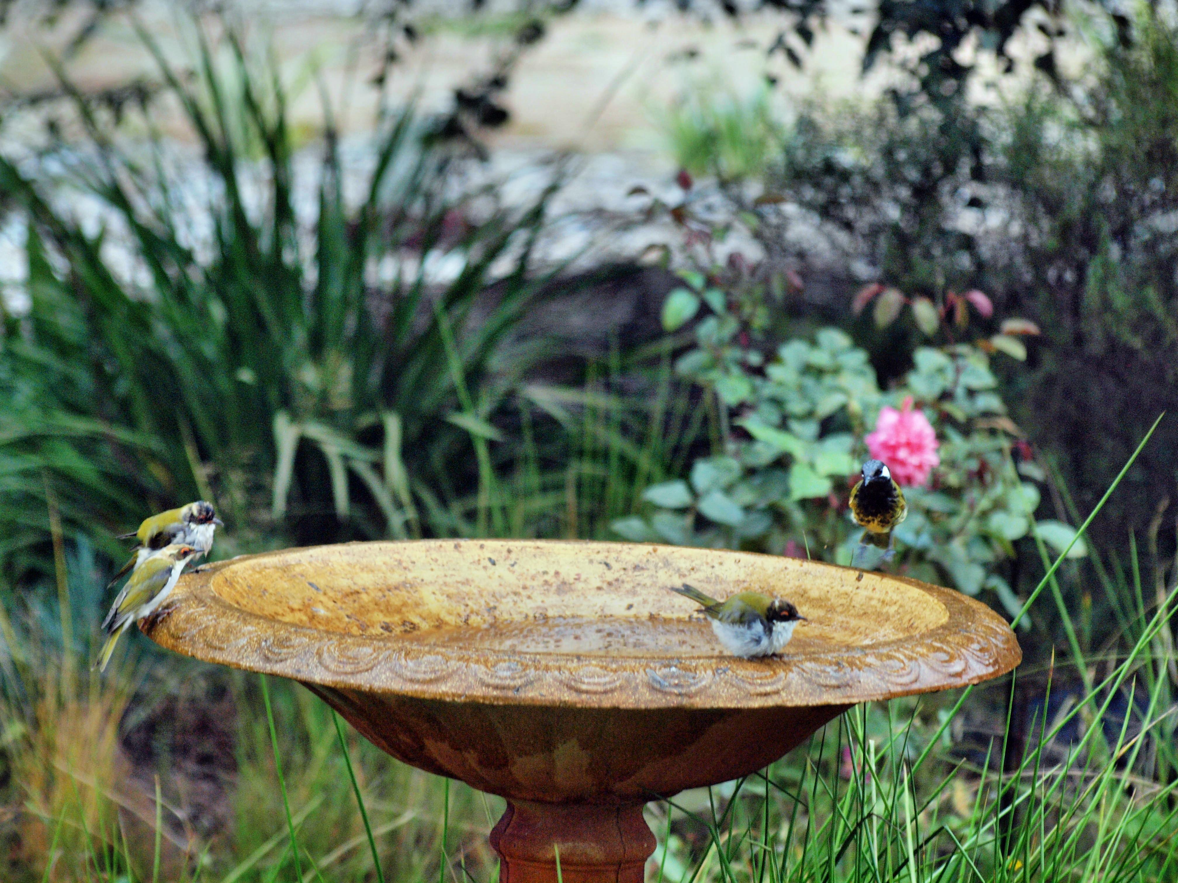 Bird-bath-44.jpeg