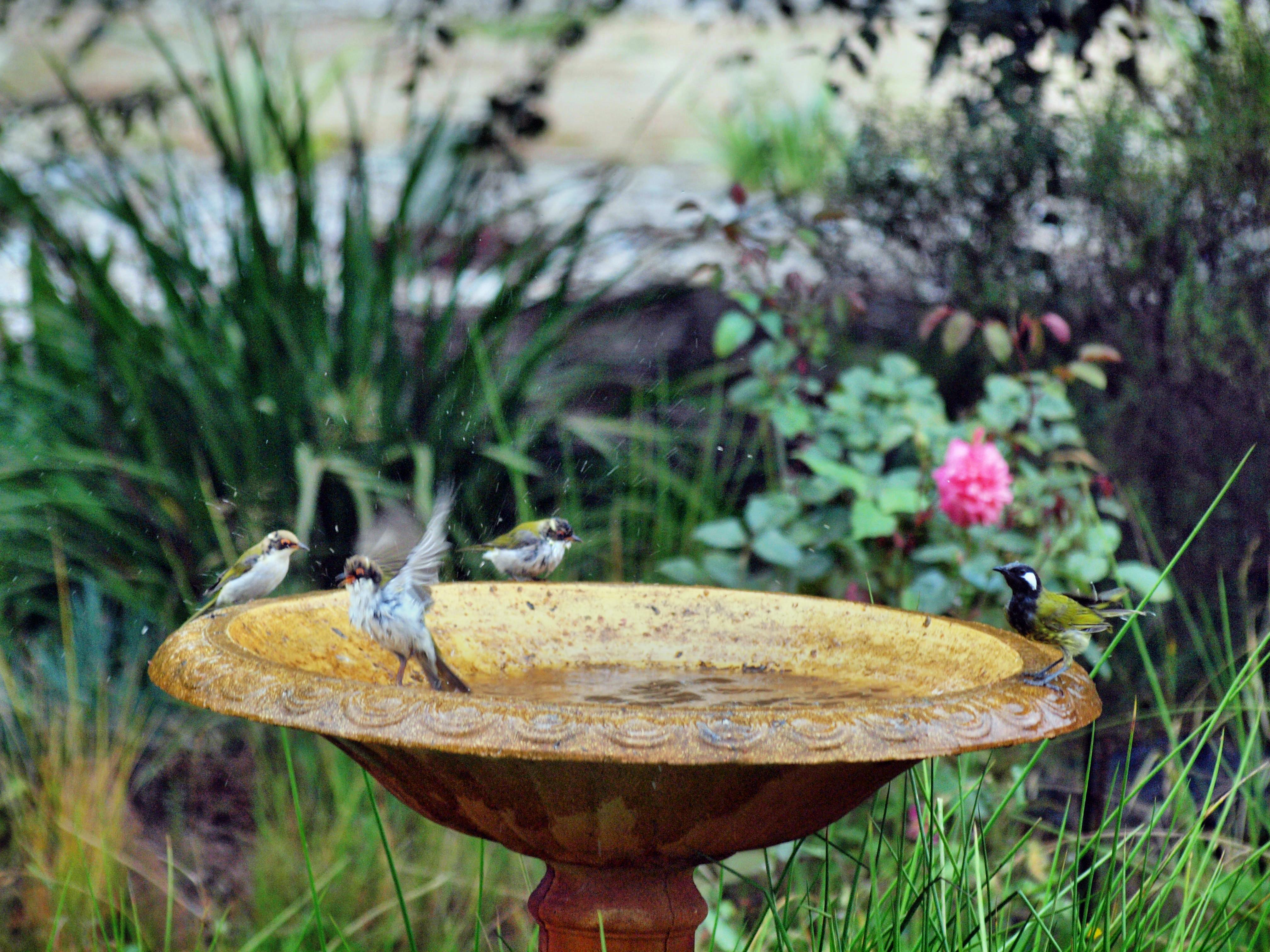 Bird-bath-45.jpeg