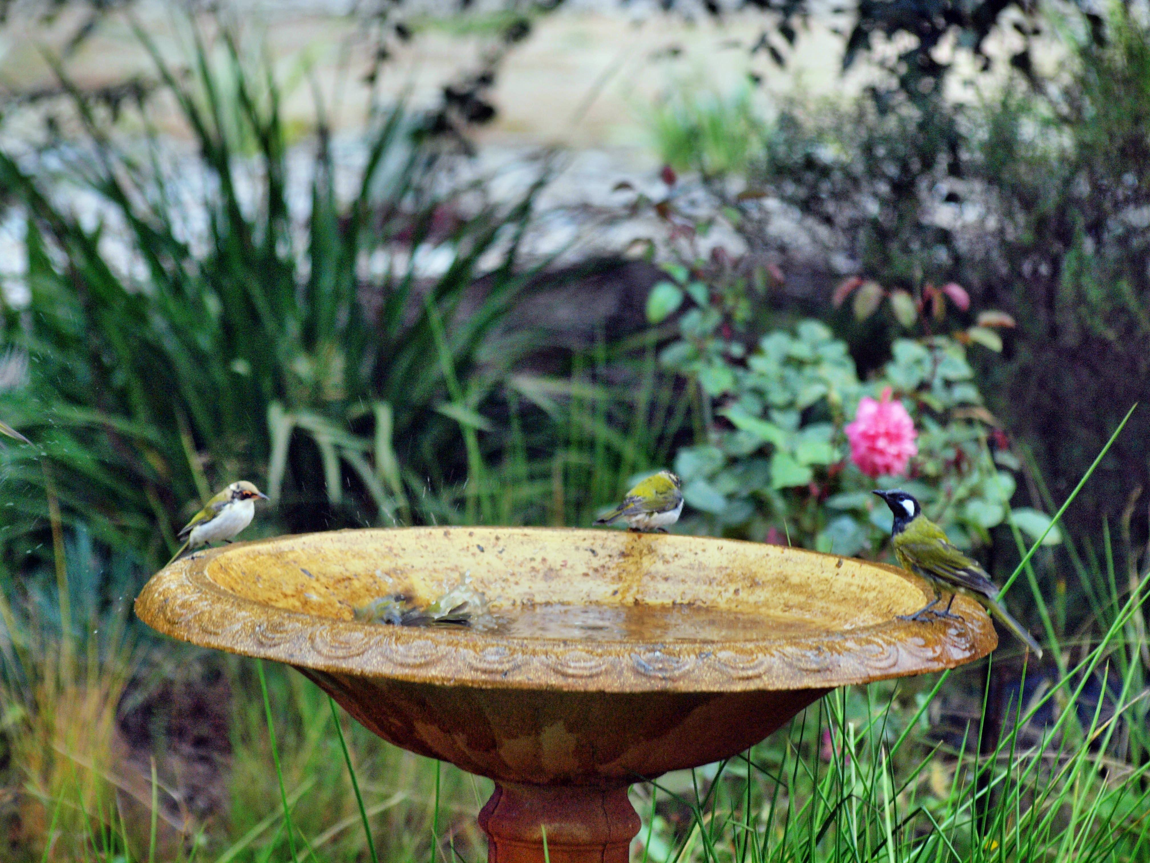 Bird-bath-46.jpeg