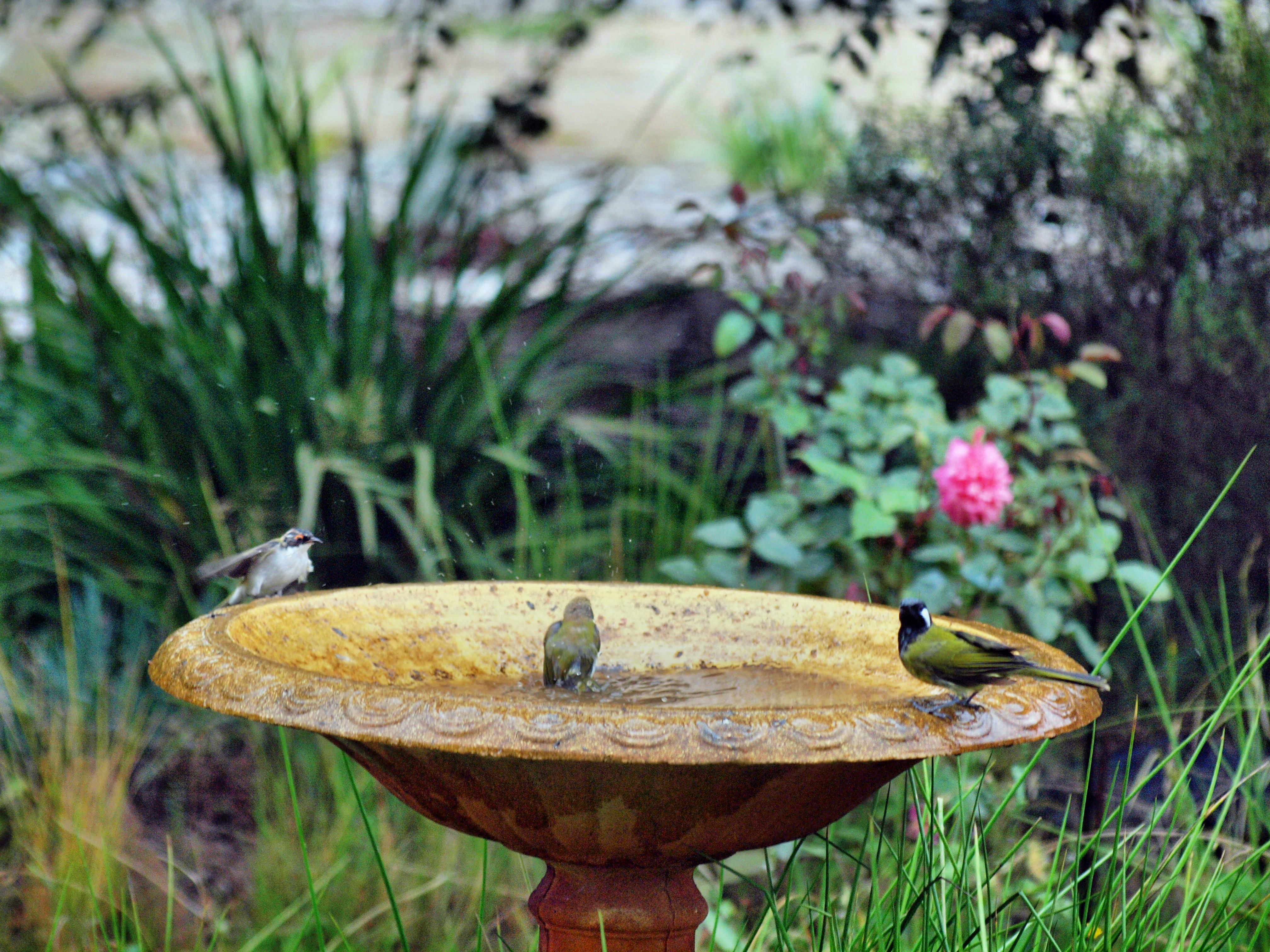 Bird-bath-48.jpeg