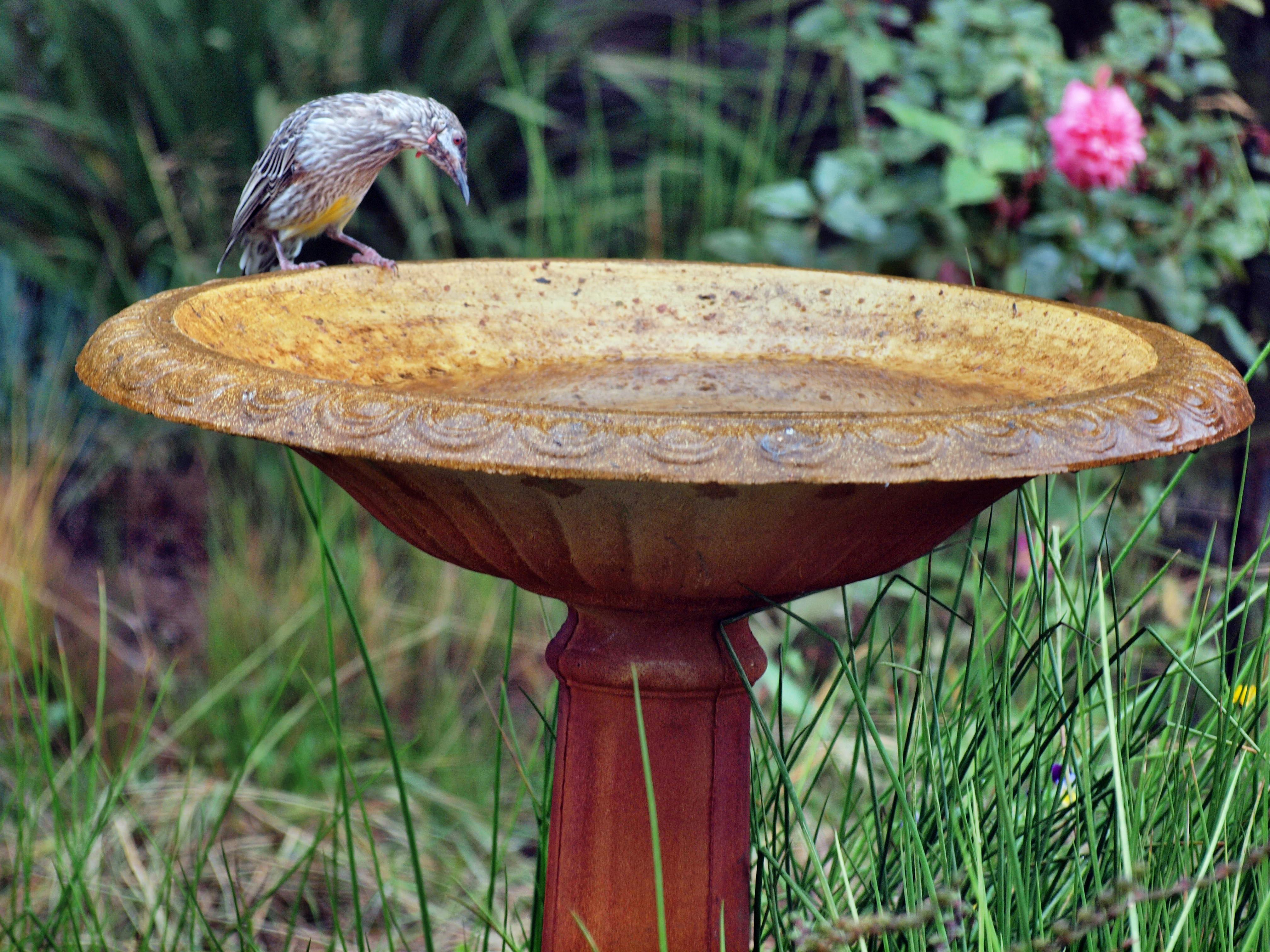 Bird-bath-5.jpeg