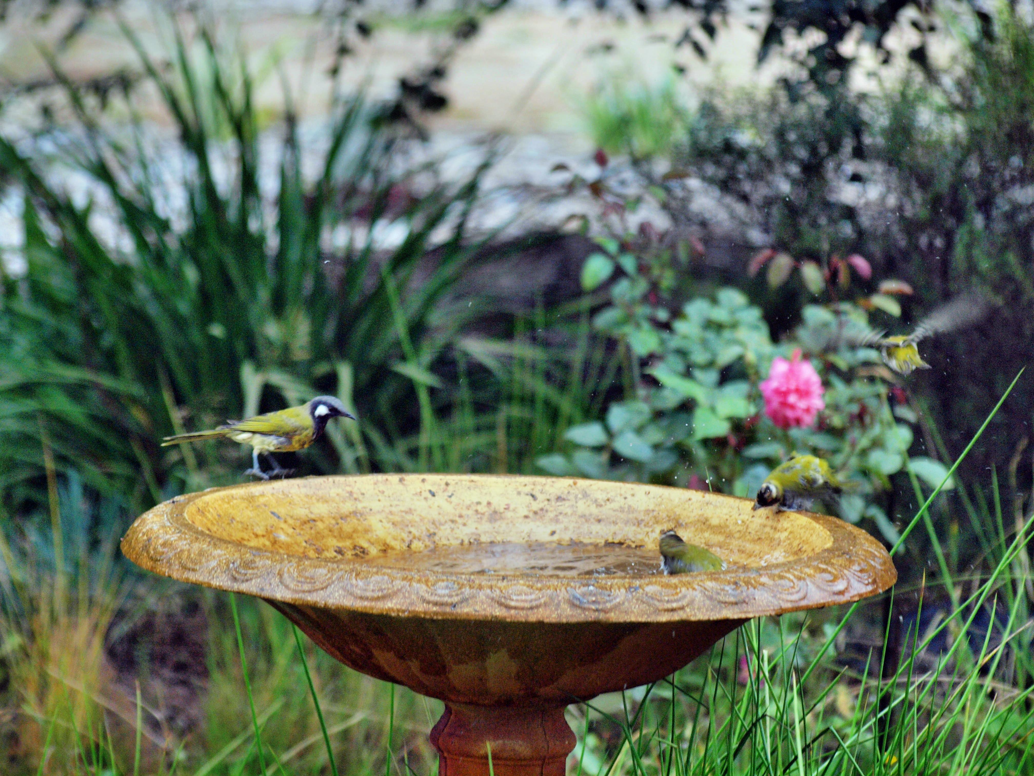 Bird-bath-50.jpeg