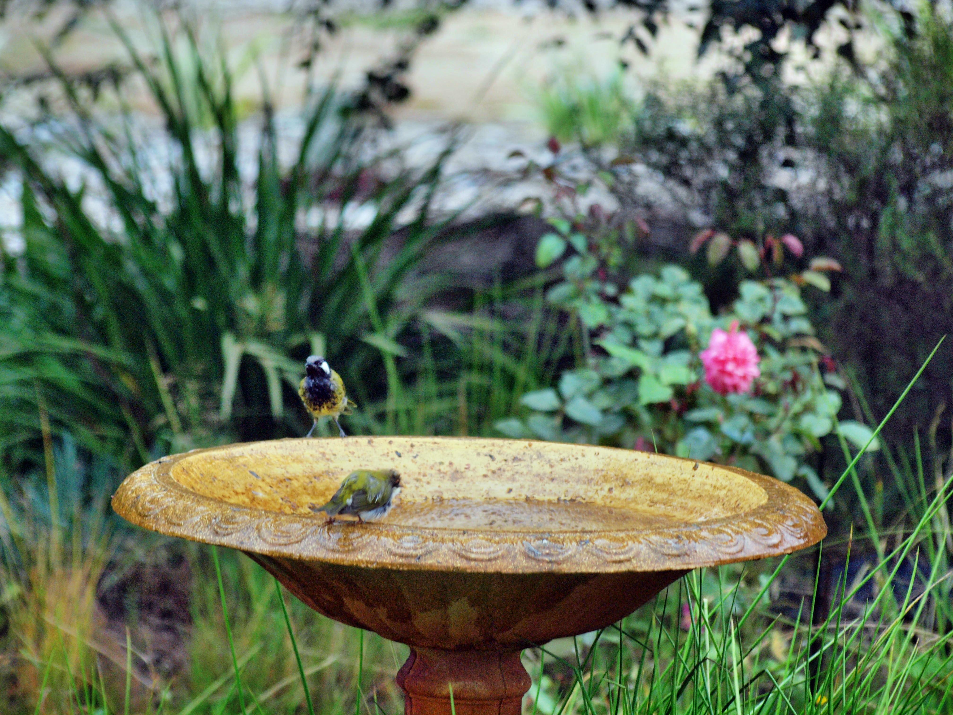 Bird-bath-52.jpeg