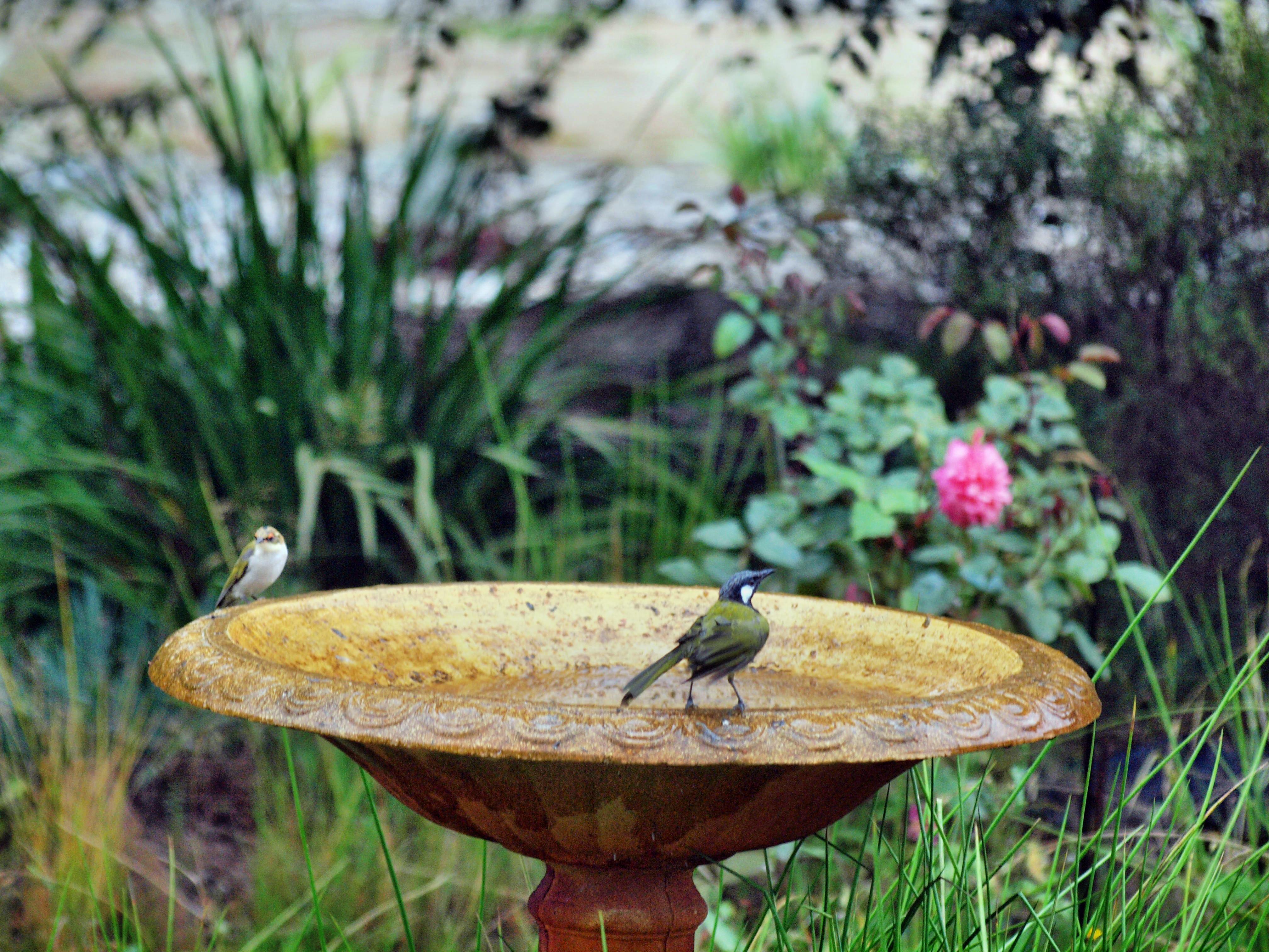 Bird-bath-53.jpeg