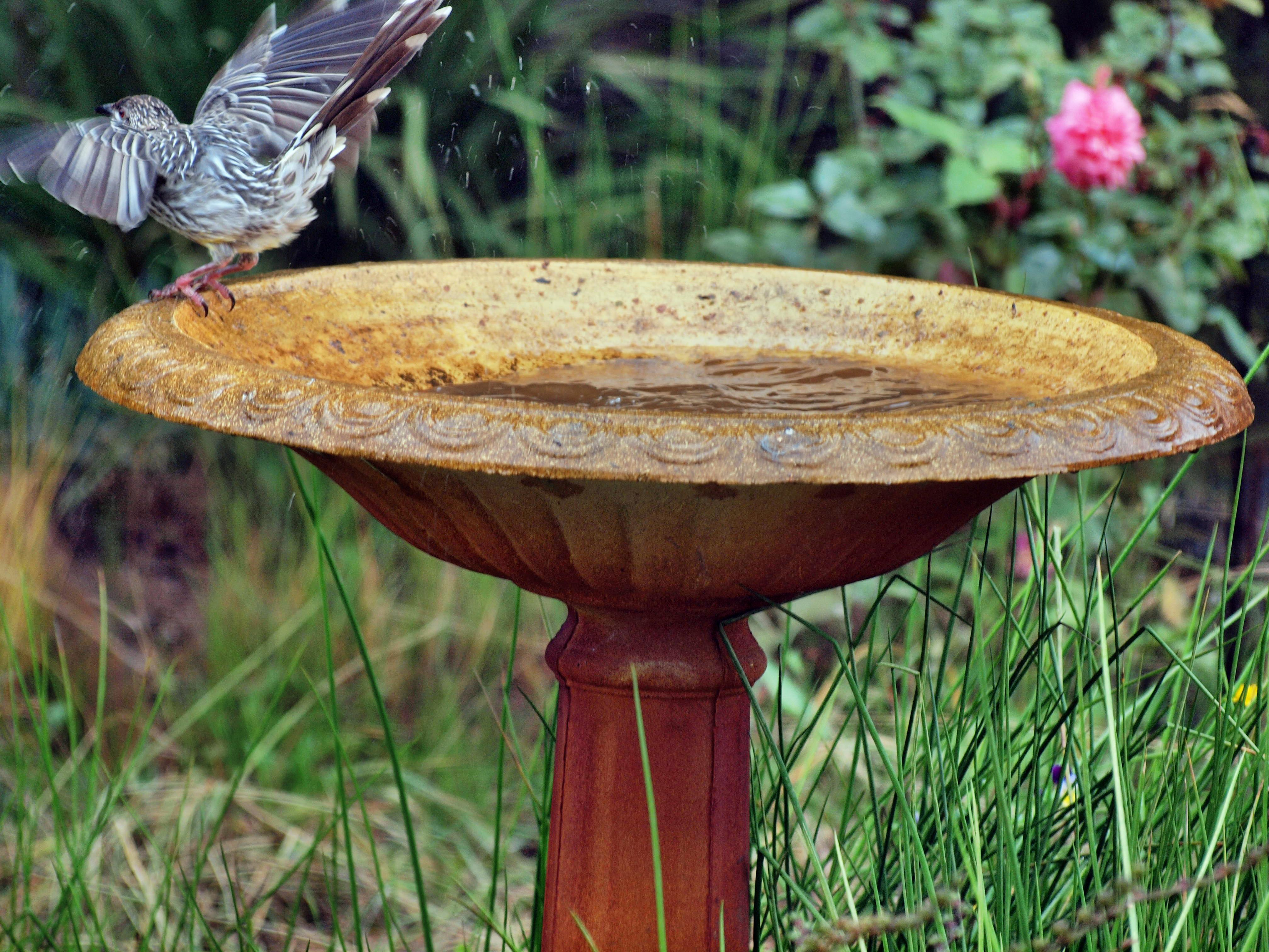 Bird-bath-7.jpeg