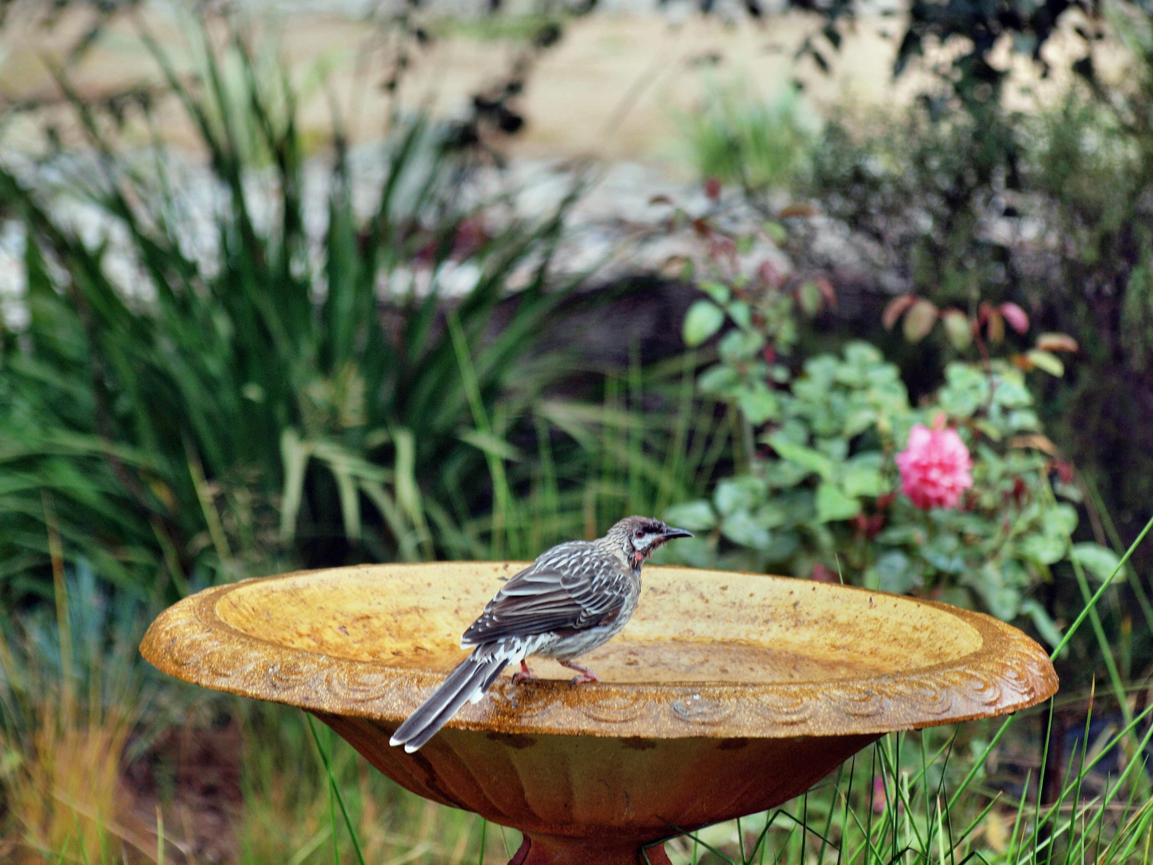 Bird-bath-9.jpeg