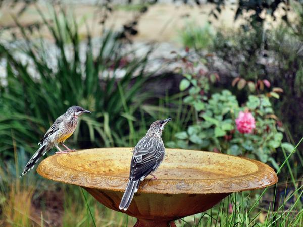 Bird-bath-10.jpeg