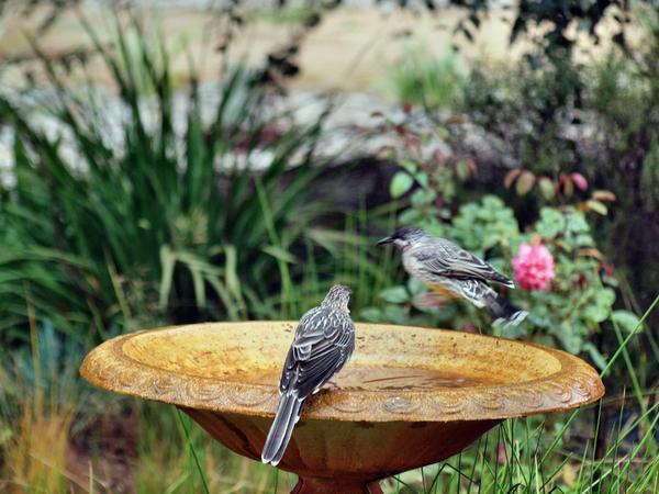 Bird-bath-11.jpeg