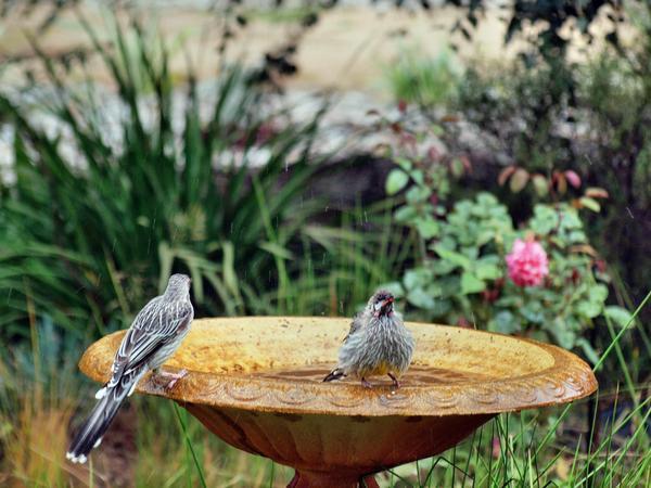 Bird-bath-14.jpeg