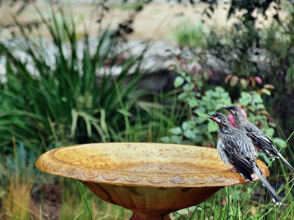Bird-bath-18.jpeg