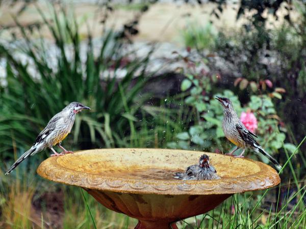 Bird-bath-19.jpeg