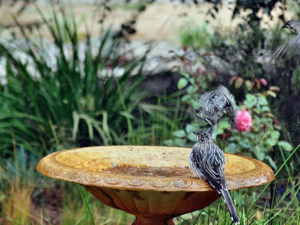 Bird-bath-20.jpeg