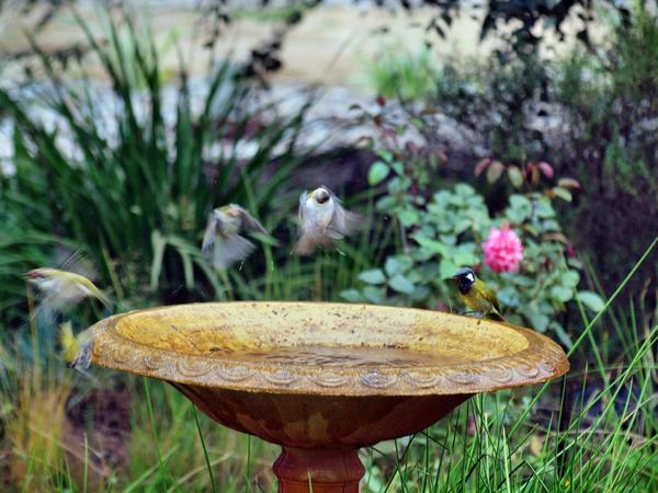 Bird-bath-25.jpeg