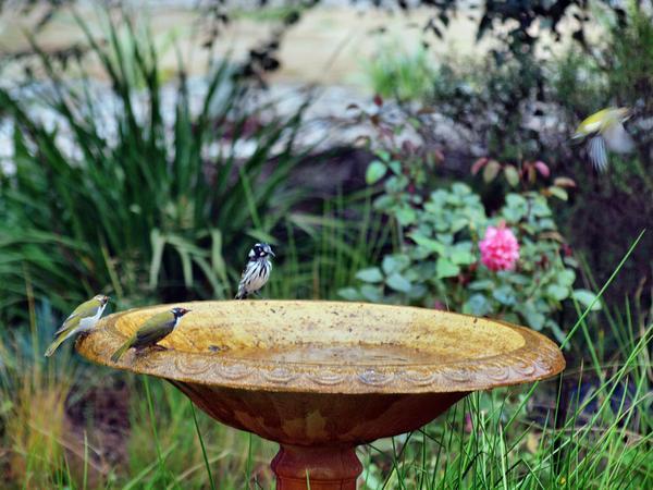 Bird-bath-26.jpeg