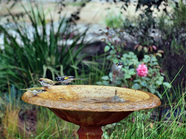 Bird-bath-27.jpeg