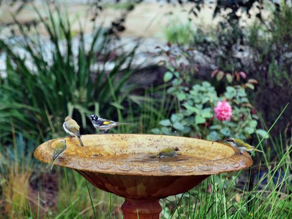 Bird-bath-28.jpeg
