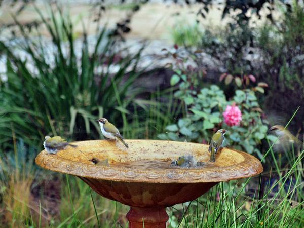 Bird-bath-31.jpeg