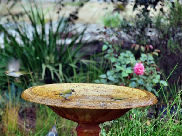 Bird-bath-34.jpeg