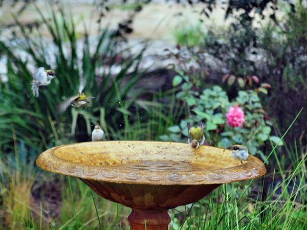 Bird-bath-37.jpeg