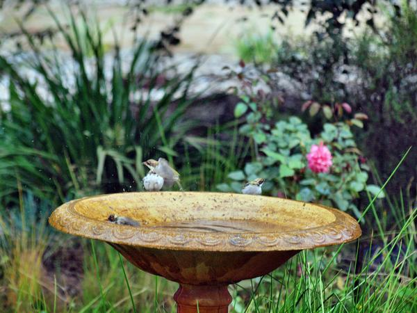 Bird-bath-39.jpeg