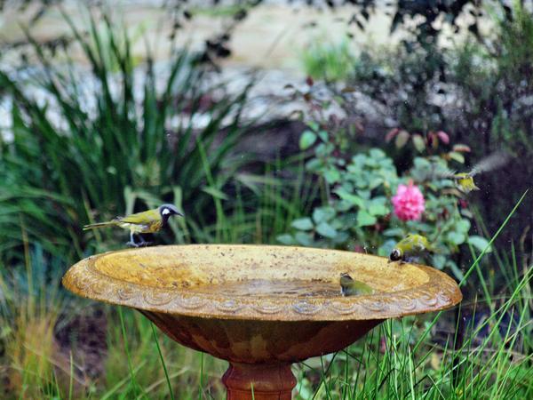 Bird-bath-50.jpeg