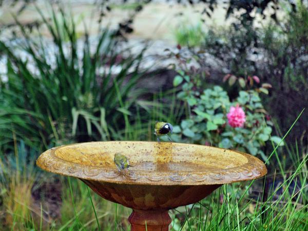 Bird-bath-51.jpeg