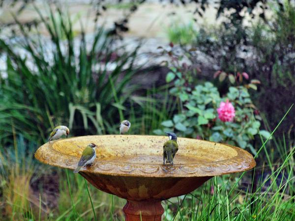 Bird-bath-54.jpeg