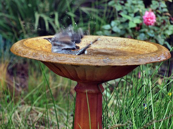 Bird-bath-8.jpeg