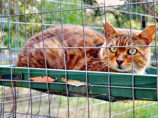 Cat-12.jpeg