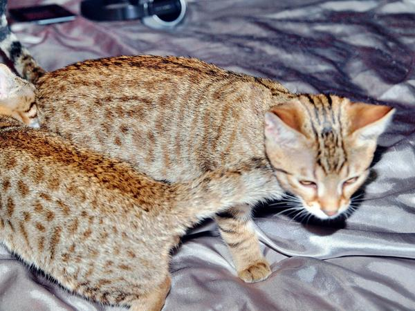 Cat-2.jpeg