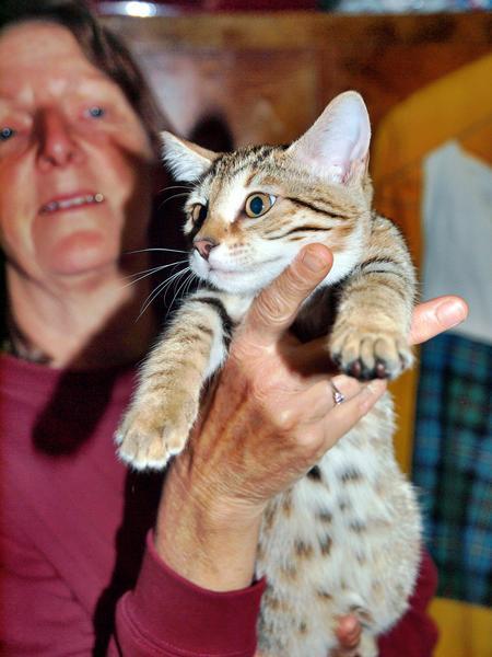 Cat-3.jpeg
