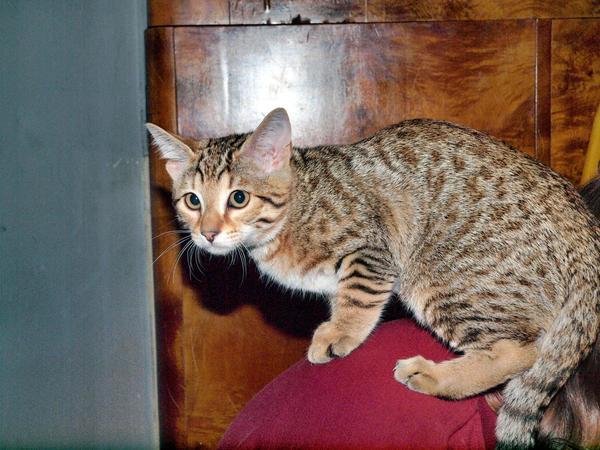 Cat-4.jpeg