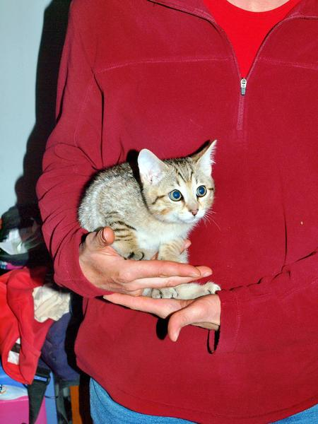 Cat-5.jpeg