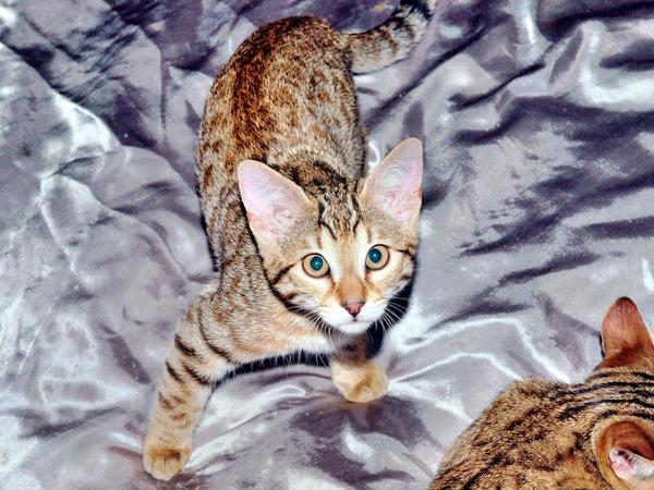 Cat-8.jpeg