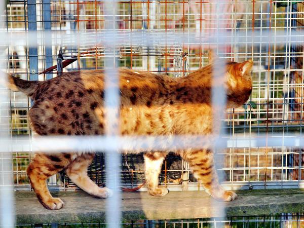 Cat-9.jpeg