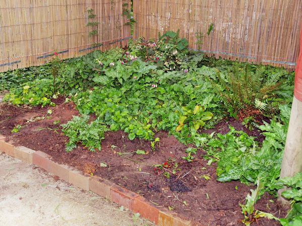 Shade-garden.jpeg