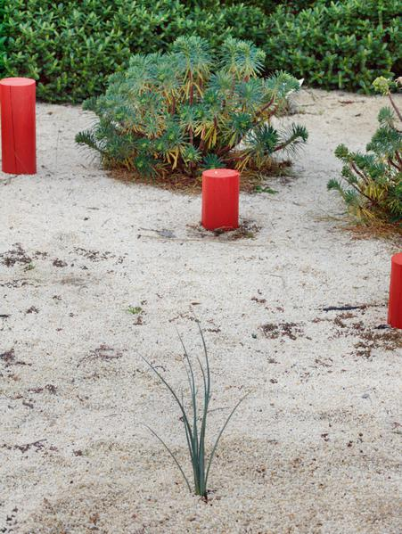 Hesperaloe-parviflora-1.jpeg
