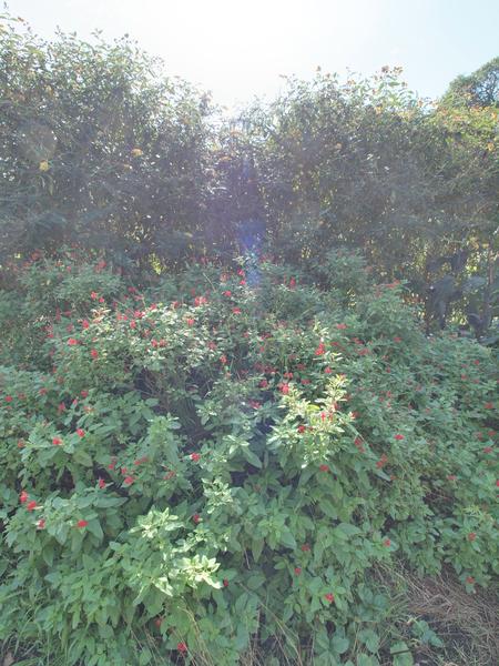 garden-centre-10.jpeg