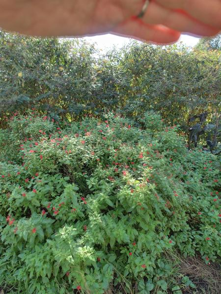 garden-centre-11.jpeg