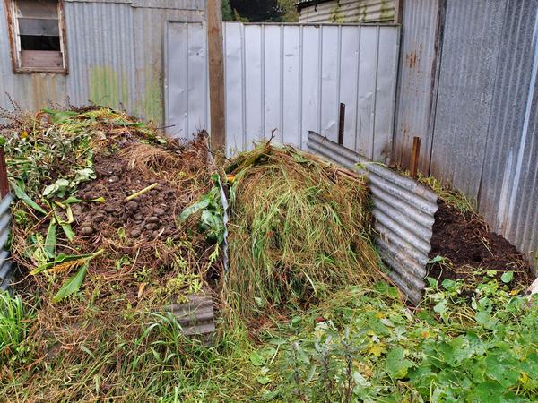 Compost-heap.jpeg
