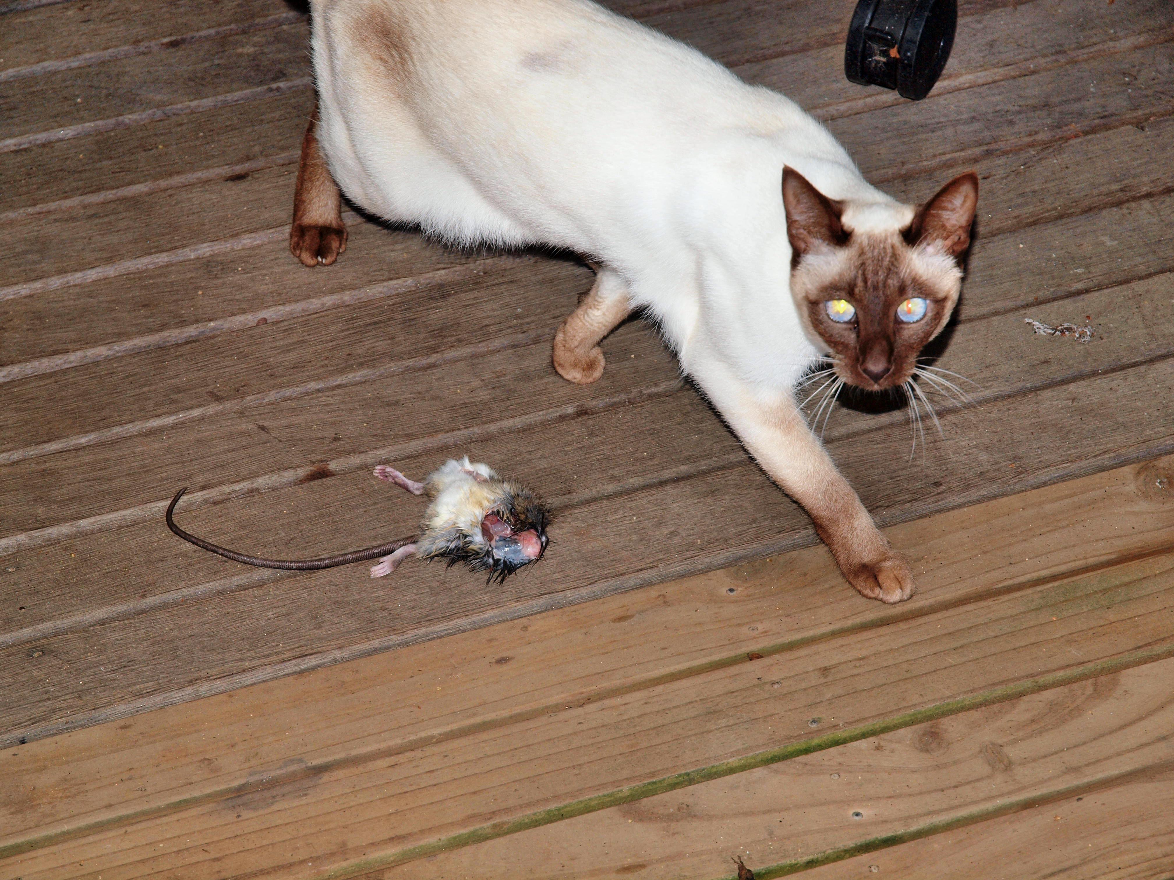 Piccola-and-rat-1.jpeg