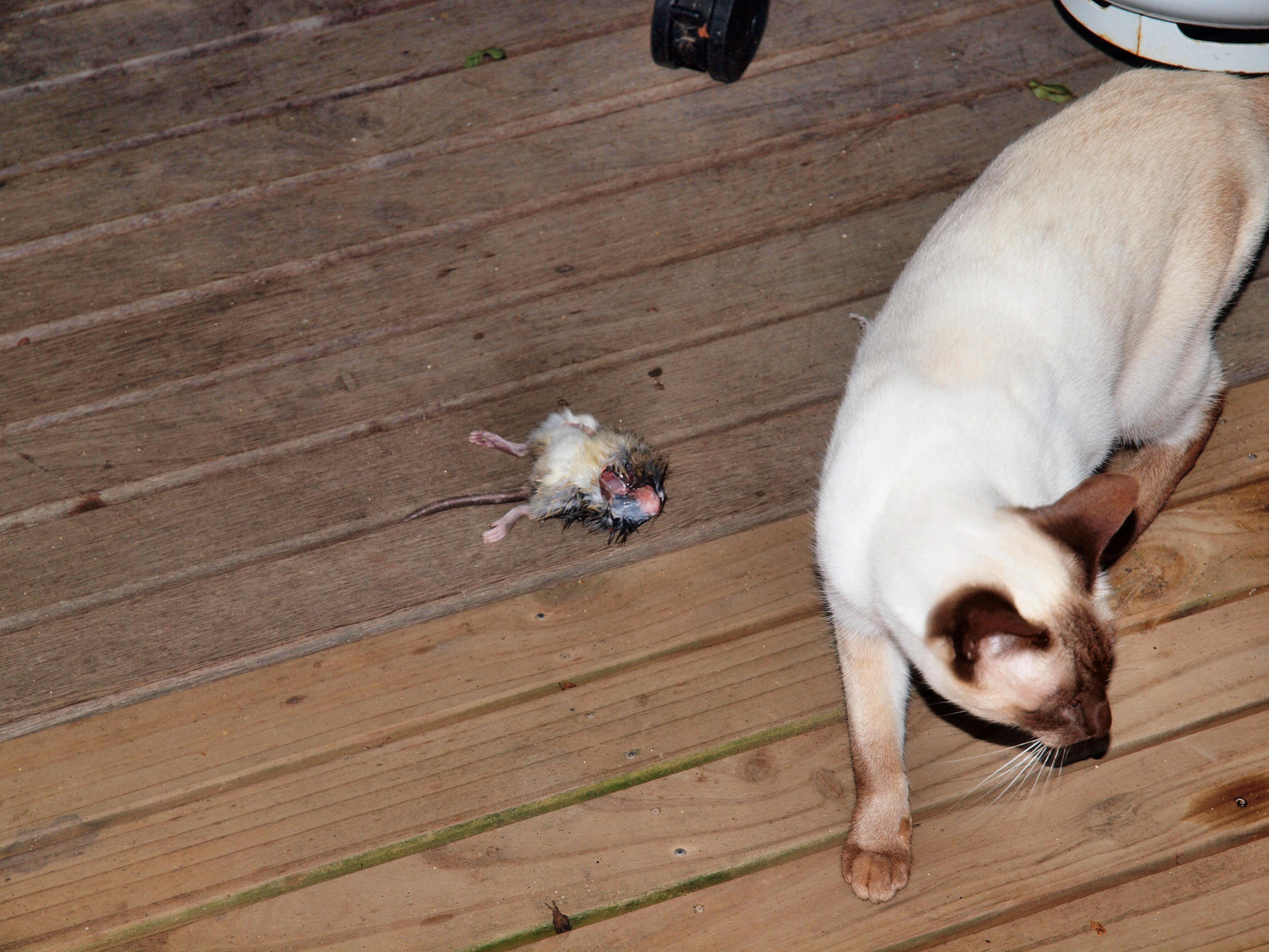 Piccola-and-rat-3.jpeg