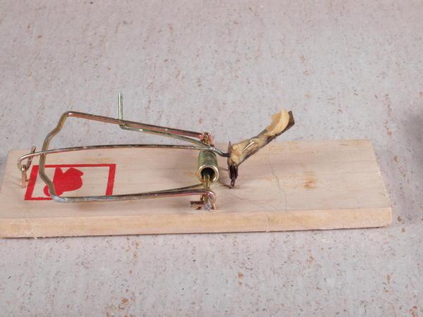 Rat-trap-5.jpeg