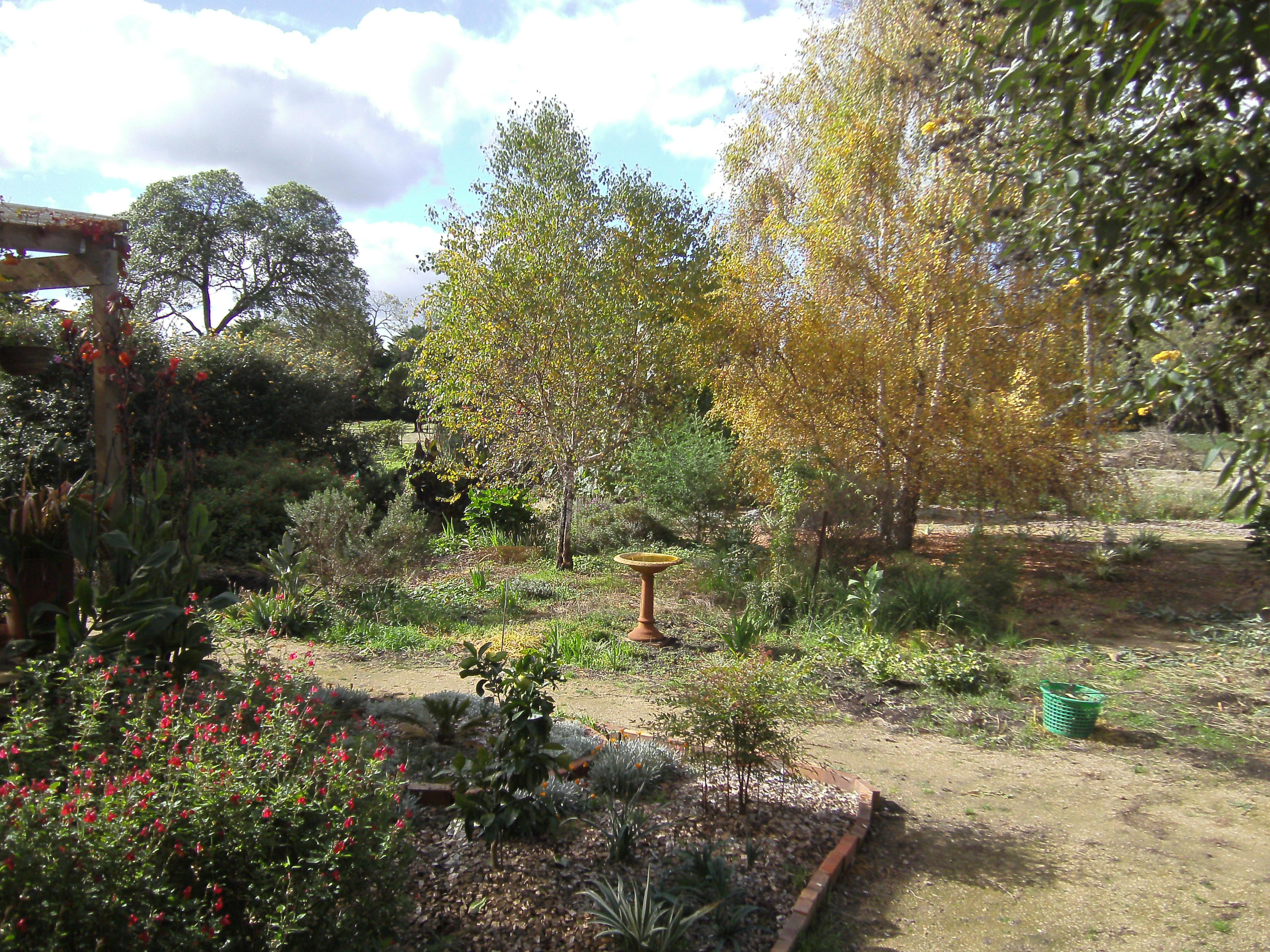 Garden-ALDI-1.jpeg