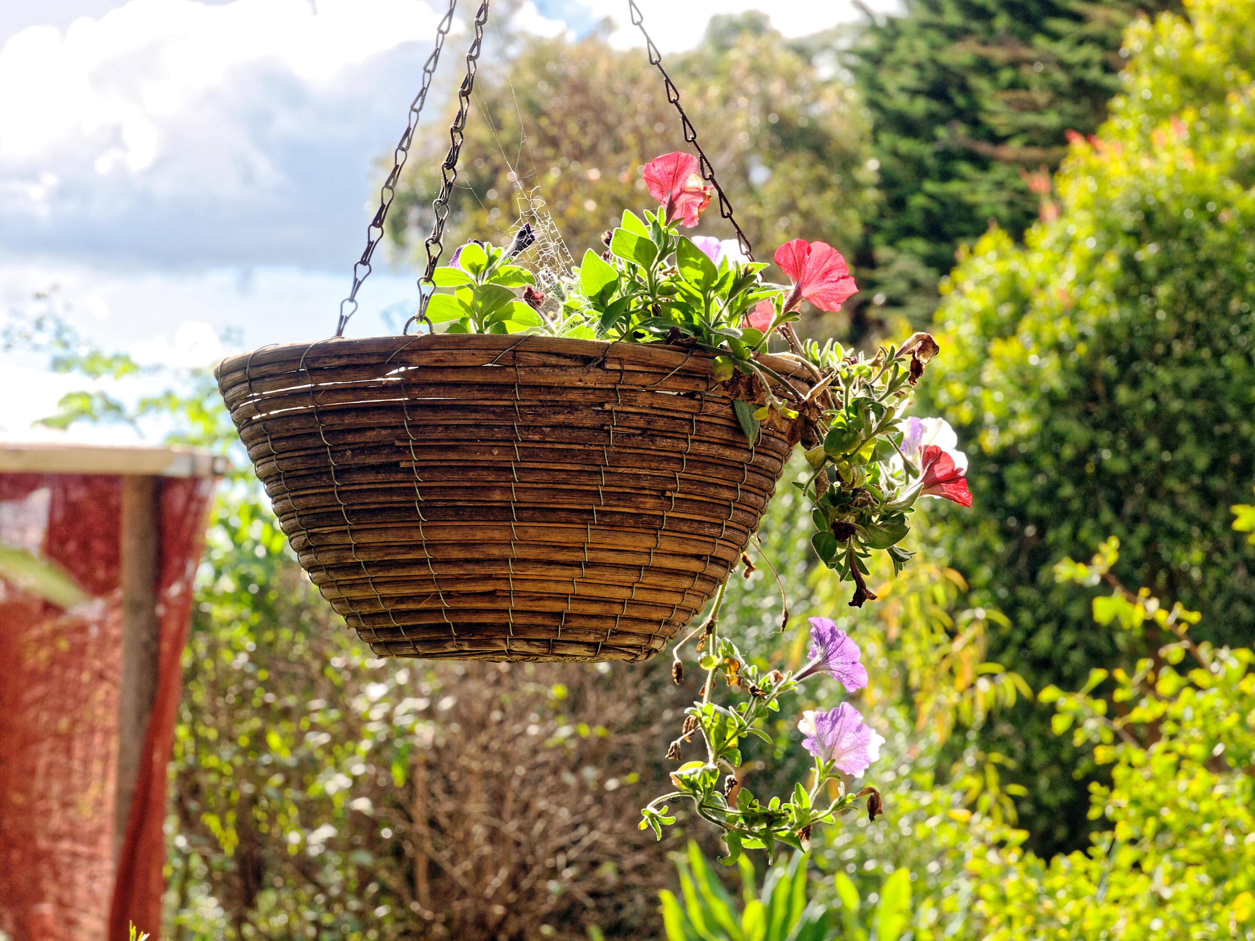 Garden-oly-4.jpeg