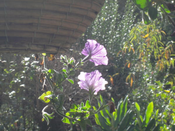 Garden-ALDI-10.jpeg